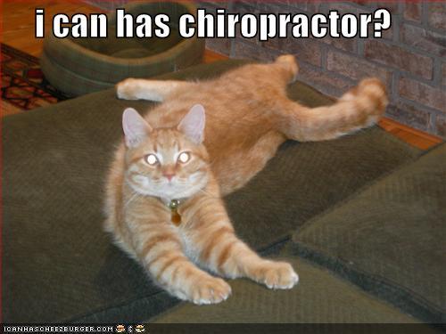 chiropractor cat
